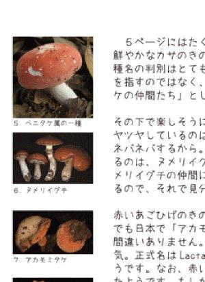 画像4: 「わいわいきのこのおいわいかい きのこ解説つき」ISBN9784990703219