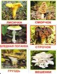 画像1: ロシア・森のきのこカード20種類 (1)
