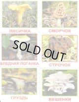ロシア・森のきのこカード20種類