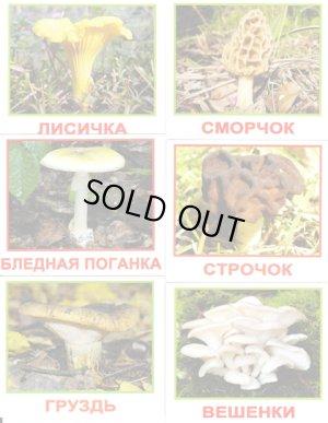 画像1: ロシア・森のきのこカード20種類