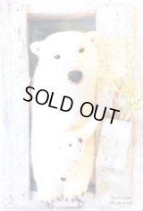 動物ポストカード「POLAR BEAR」(スタジオ・アルガリ製)